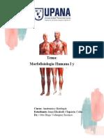 Morfofisiología Humana I y II.docx