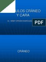 1MUSCULOS_DE_CRANEO_Y_CARA
