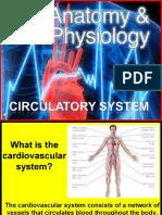 170-Anatomy-Circulatory-System.ppt