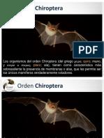 01 Orden Chiroptera (1).pdf