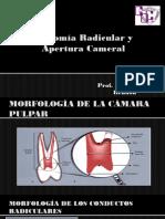 Anatomía radicular y apertura cameral