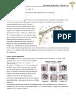 Clase 11 - 1 y 2  semana desarrollo embrionario.pdf