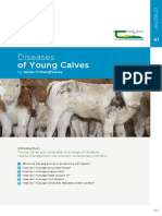 Diseases-of-young-calves.pdf