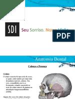 Anatomia Dente - SDI 2014