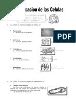 Ficha-Clasificacion-de-las-Celulas-para-Quinto-de-Primaria