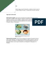 4- Clasificacion de Los Insectos