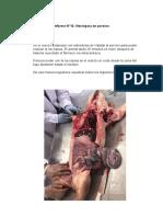 PATOLOGIA INFORME NECROPSIA PORCINO.docx