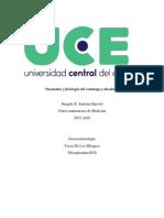 Tarea Anatomía y fisiología de estómago y duodeno. (2).pdf