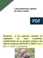 7.1_Razas_caprinos