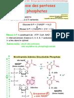 Biochimie microbienne_9-Voie-pentoses-phosphates.pdf