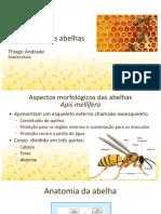 Apicultura Aula 2 - anatomia - slides.pdf
