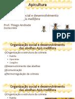 Apicultura Aula 3 - desenvolvimento.pdf