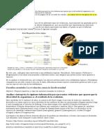 _acti idad 1  Medio Tercera-3072 (1)