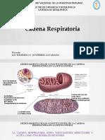 T 16 Cadena Respiratoria