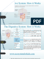 The Digestive System- how it works.pptx