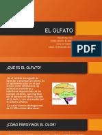 EL OLFATO TRABAJO BIOLOGIA.pptx