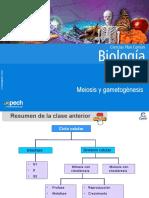 Clase 10 Meiosis y gametogénesis
