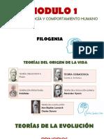 FILOGENIA ANDRES GAMBA.pdf