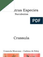suculentas.pptx