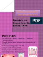 Incisivos centrales y laterales inferiores
