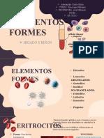 elementos formes