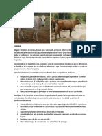 GANADO LECHERO TROPICAL.docx