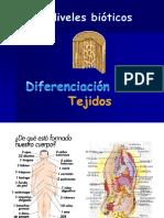 tejidos__3eso (1)