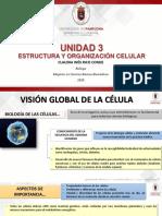 Unidad 3_Estructura y Organización Celular_Tema 1 (1).pdf