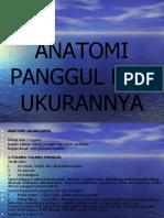 Anatomi Panggul Dan Ukurannya