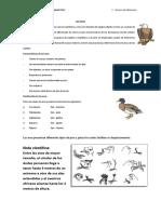 Las aves-5TO-PRIMARIA