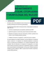 PROTOCOLO 8 CITOPLASMA Y NUCLEO