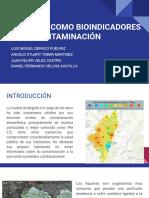 LÍQUENES COMO BIOINDICADORES DE LA CONTAMINACIÓN.pptx