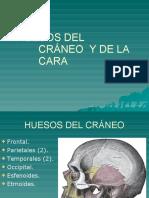 5huesosdelcrneoydelacara-111005151424-phpapp01