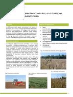 FRUMENTO_DURO_controllo_delle_erbe_spontanee_nella_coltivazione_biologica_del_frumento_duro