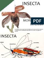 INSECTA 4. Sistemas. circulatorio - digestivo - reproductor