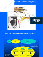 8.Clase INSECTA 4. Sistemas. respiratorio - glandular.pdf