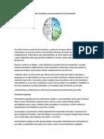 Hemisferios cerebrales y el procesamiento de la información.pdf