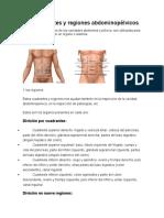 Anatomia 1 taller