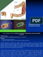 04. Patologia intestinală. Manifestările orale ale patologiilor intestinale._0.pdf