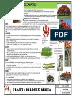 landscape detail study on gulmohar tree