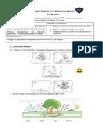 Guía 3° básico  N°1 Ciencias naturales, las plantas