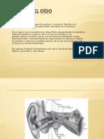 Diapositivas OÍDO y VISIÓN para
