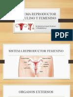 SISTEMA REPRODUCTOR MASCULINO Y FEMENINO.pptx