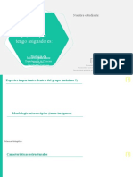 S8-FormatoPresentacionPhylumGenero.pptx