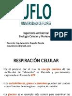 7.__RESPIRACION_CELULAR.pdf
