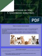страхование животных (3)