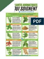 10-plantes-qui-soignent-vraiment