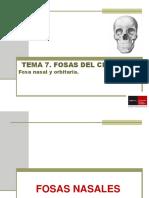 Tema 6 Fosas y cavidades I - nasales, senos y orbitarias (autonomo)