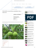 ÁRBOL DEL PAN características, propiedades, fruto y mucho más