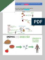 Sistema-digestório-e-enzimas-digestivas